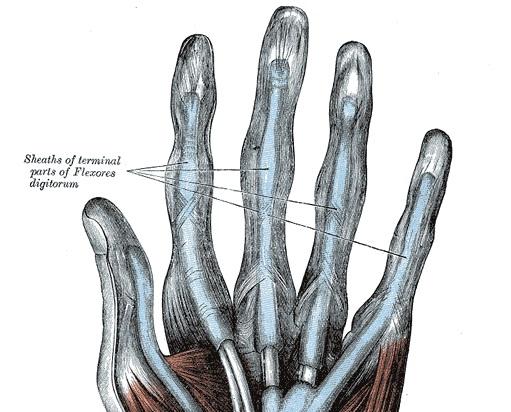Finger Pain-anatomy-hand-flexor-tendon-sheaths-jpg