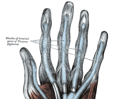 Finger Pain (Fretting Hand)-anatomy-hand-flexor-tendon-sheaths-jpg