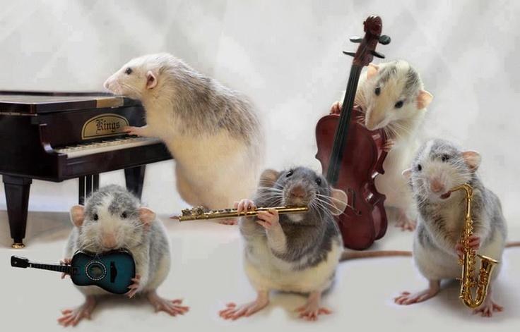 Fender Stratocaster for Jazz?-jazz-rats-jpg