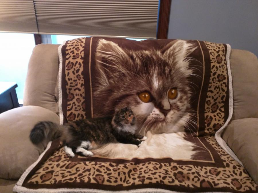 The Current Herd - couch shot-cat-jpg