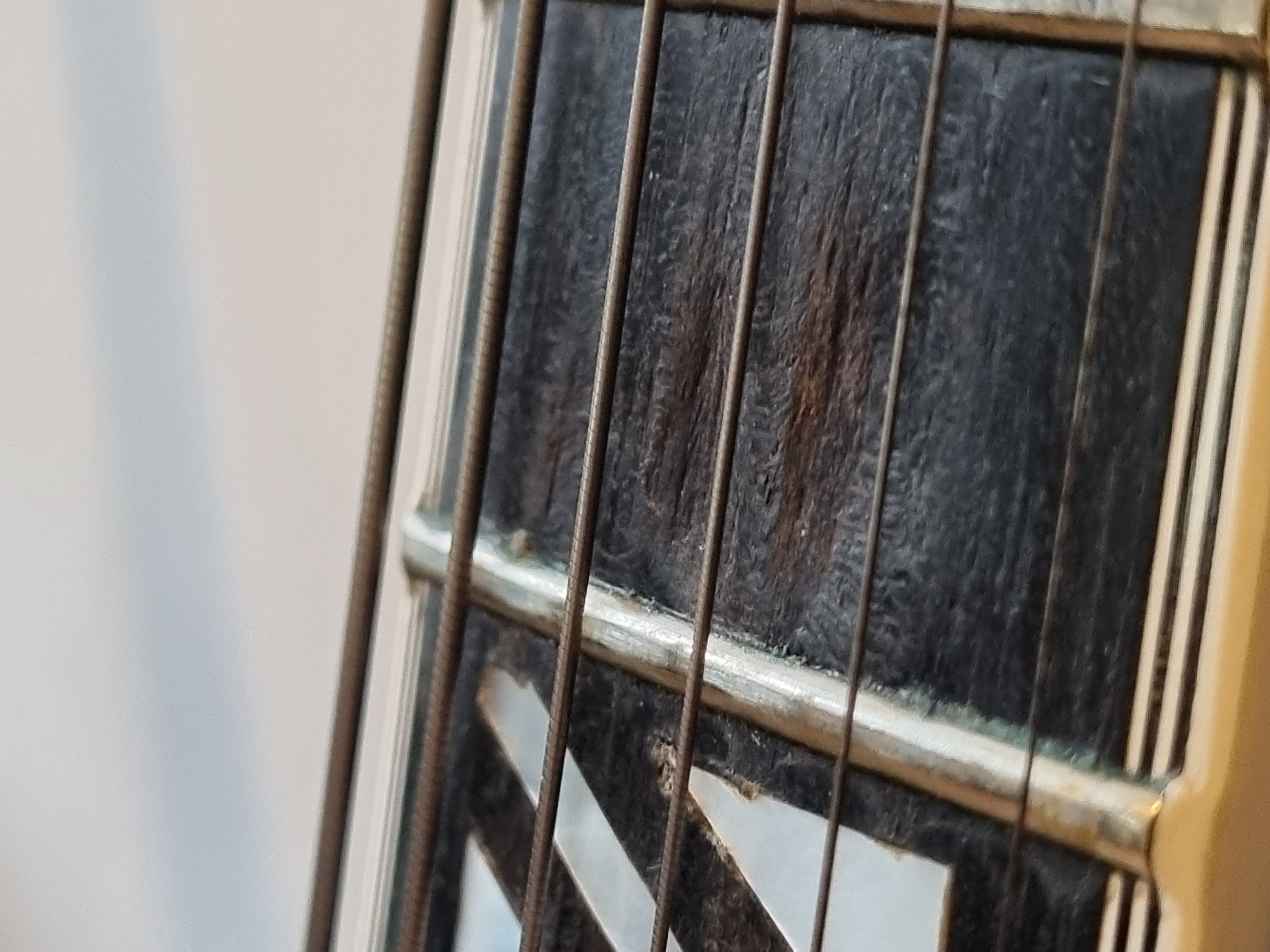 Fretboard pitting - What's the deal?-20210913_180034-jpg