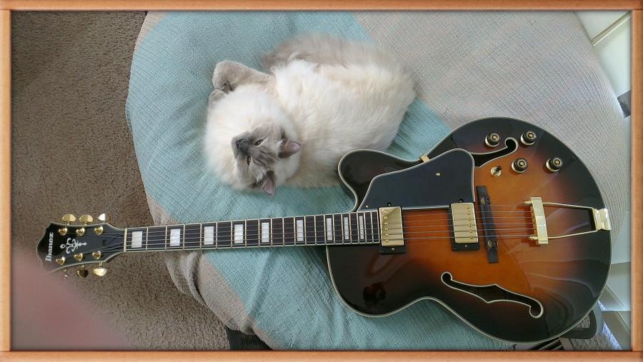 Perfect Jazz guitar?-imag0055-1-jpg