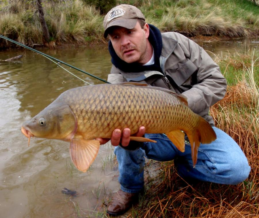 Thumb over neck?-jay-zimmerman-fly-fishing-carp-colorado-backstabber-may-19-2011-jpg