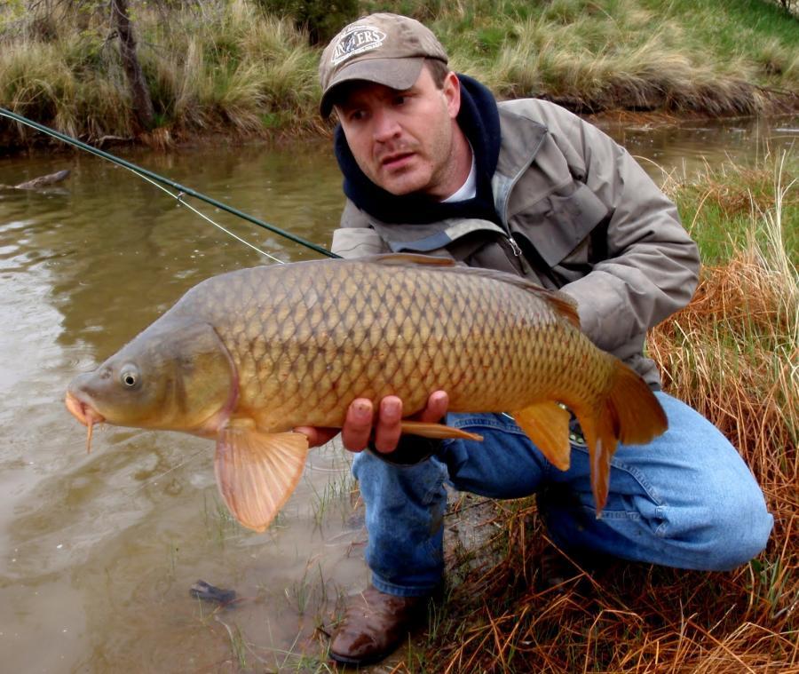 Thumb over neck?-jay-zimmerman-fly-fishing-carp-colorado-backstabber-may-19-2011-jpg