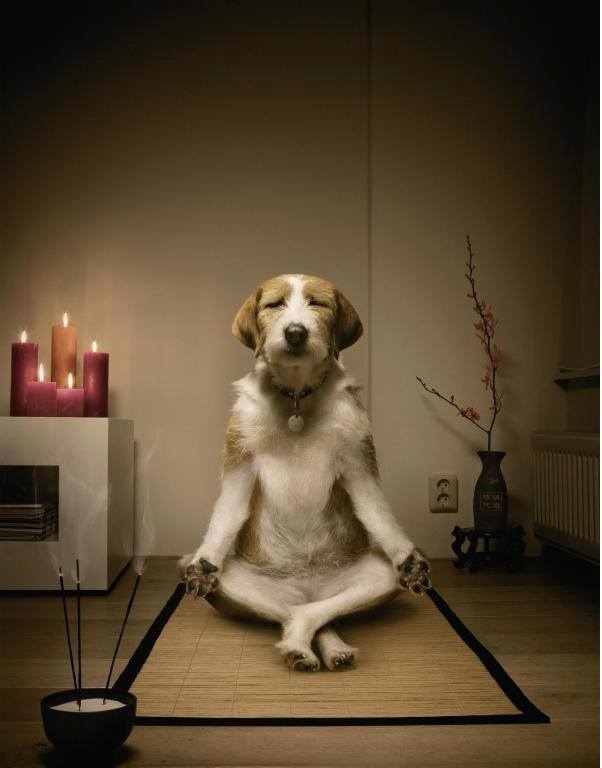 Thoughts on how to develop melodic phrases that have balance-zen-dawg-jpg